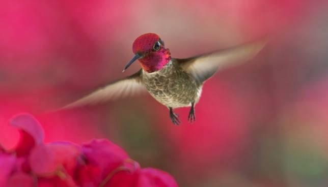 木の実と食べる鳥と見つめる鳥